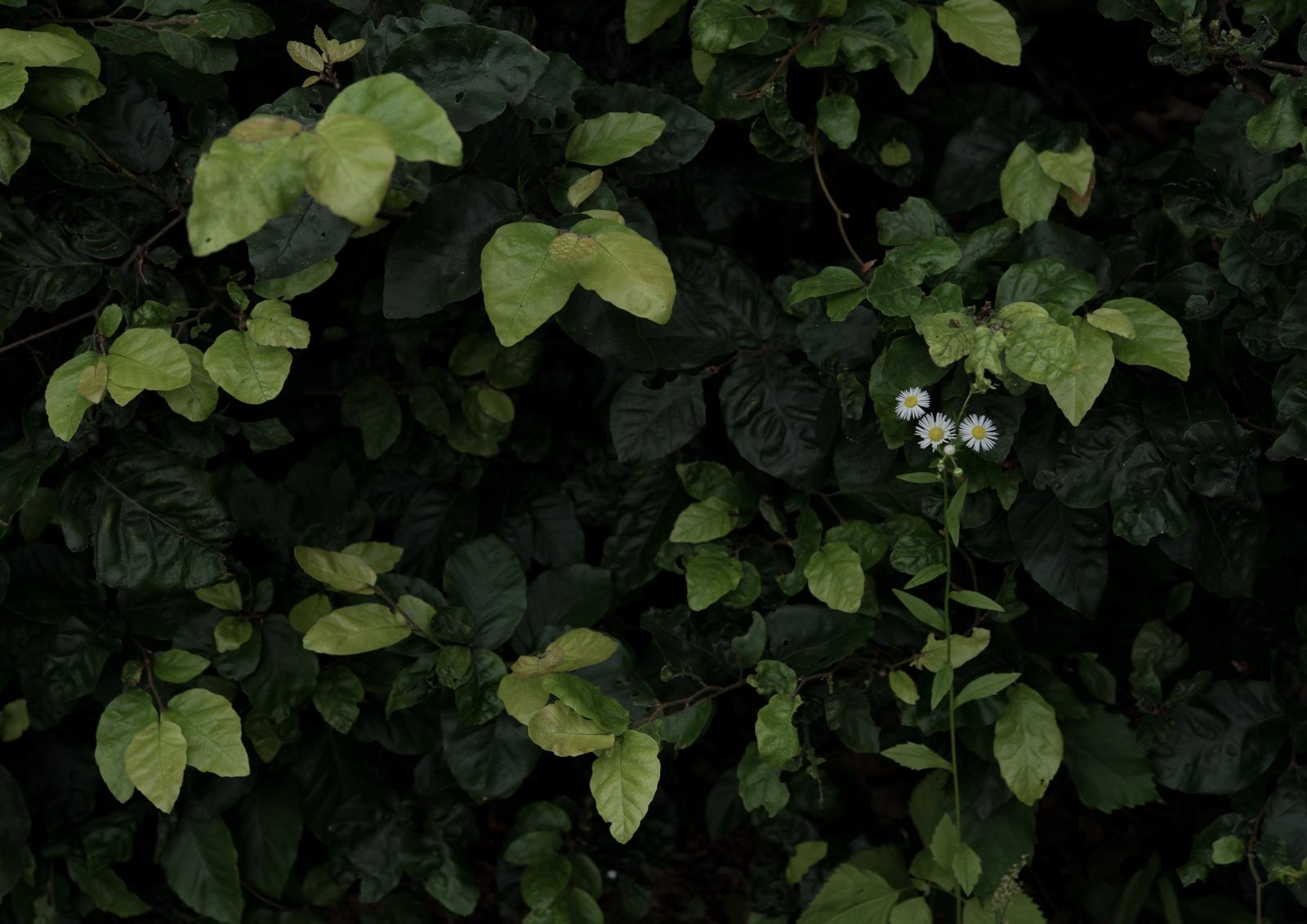 01_白くて小さい花