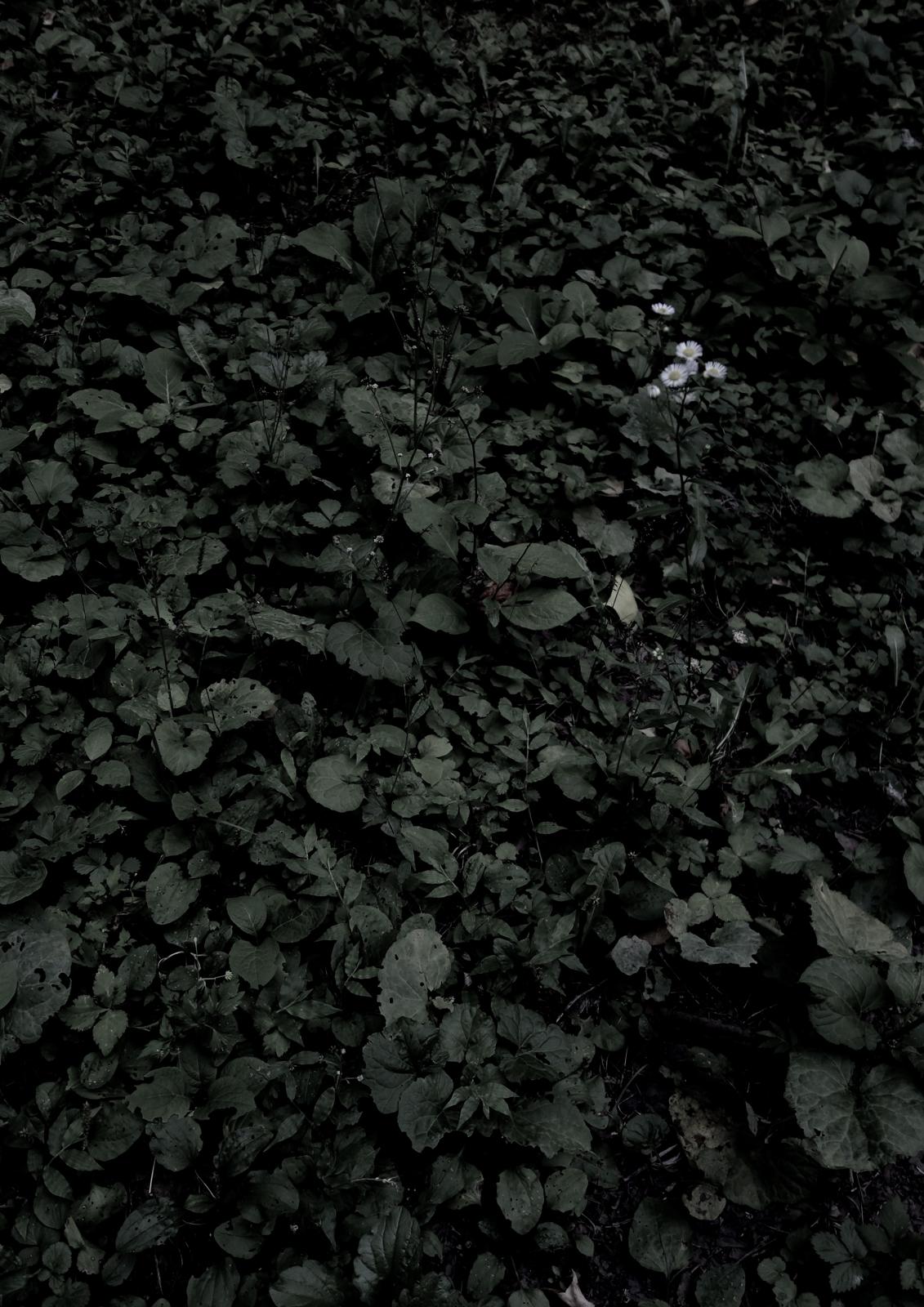 03_緑の中の白い花