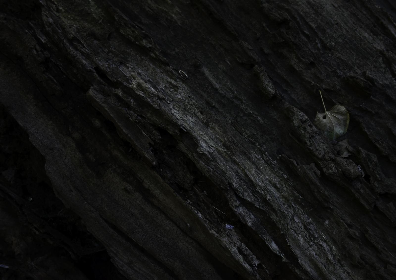 08_木に張り付いた葉