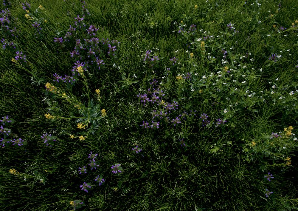 11_色とりどりの芝