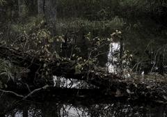 10_池の中に倒れた木